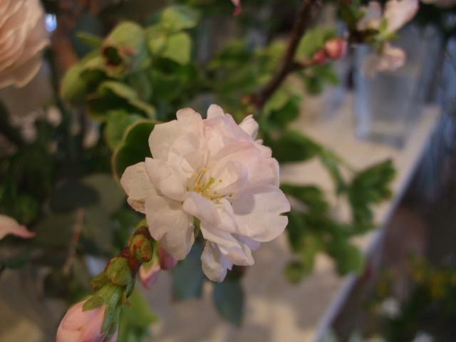 オークリーフ花の教室(松崎さんの作品)_f0049672_1653122.jpg