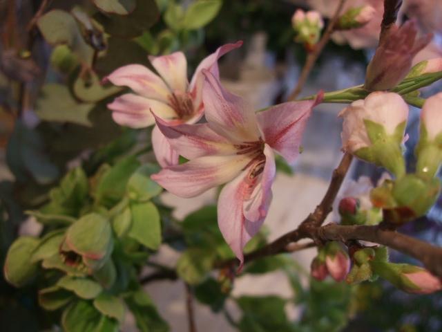 オークリーフ花の教室(松崎さんの作品)_f0049672_16531810.jpg