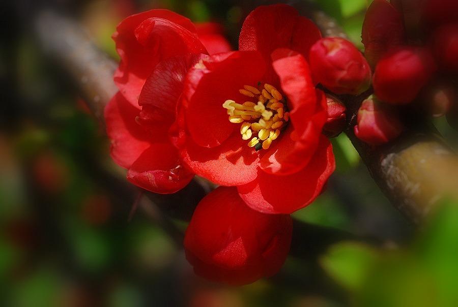 春到来!_c0187781_12445828.jpg