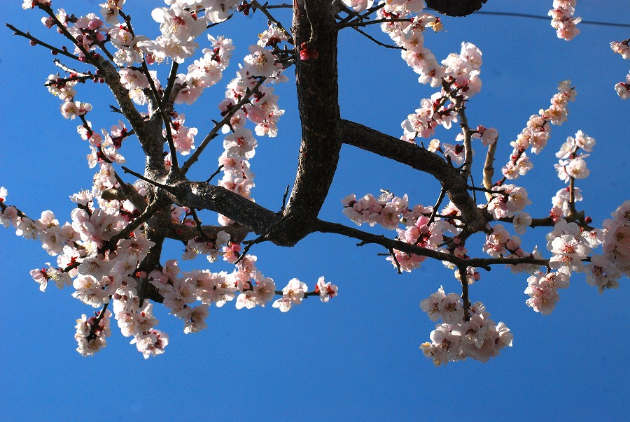 春到来!_c0187781_919843.jpg