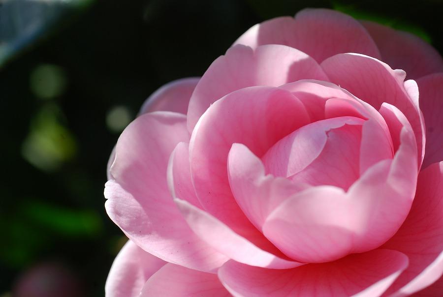 春到来!_c0187781_9211338.jpg