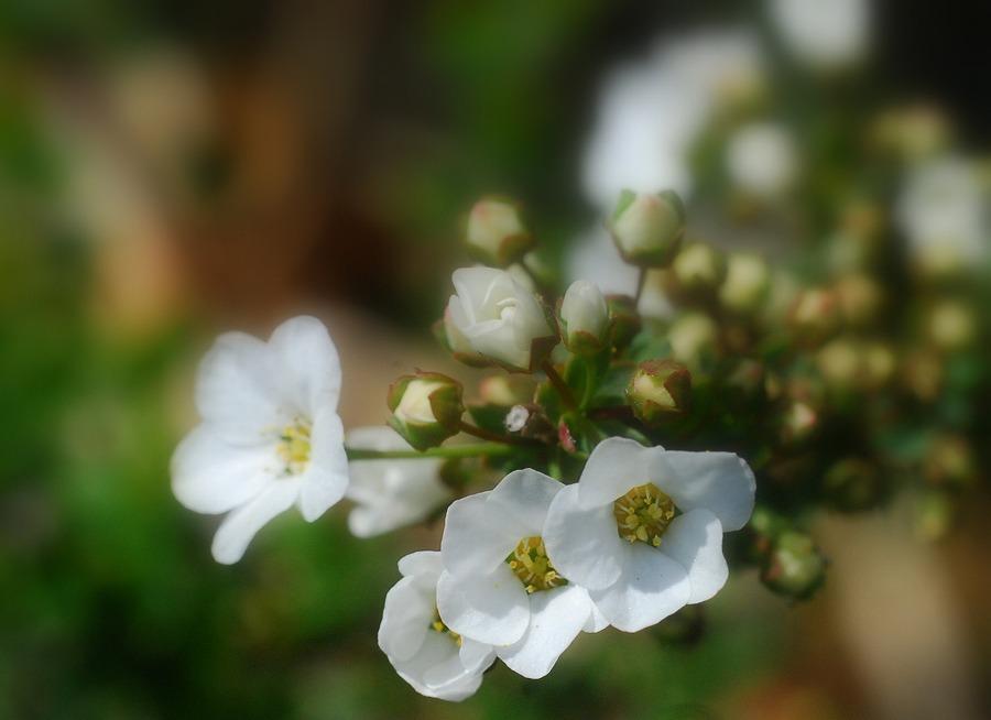 春到来!_c0187781_9235568.jpg