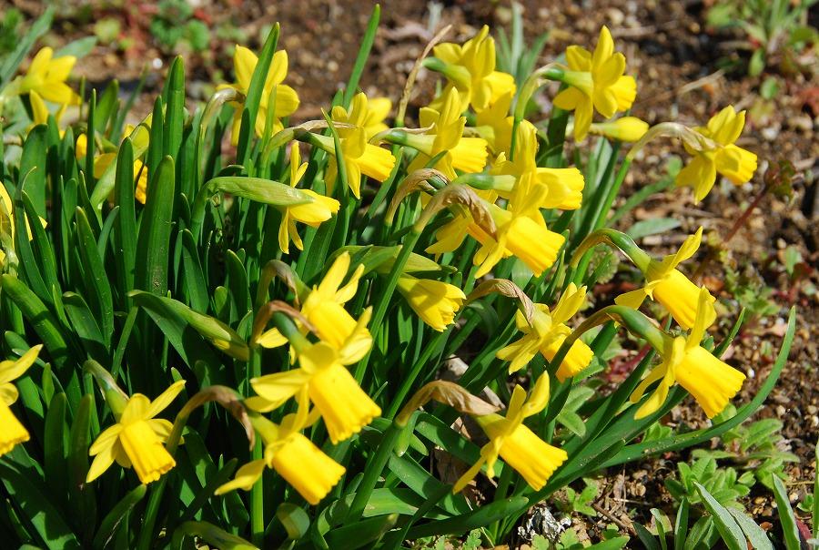 春到来!_c0187781_9271755.jpg