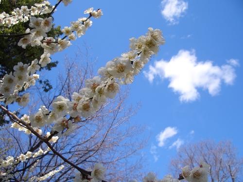 昨日は鈴鹿明神社へ参拝をしてきました_c0234285_13283561.jpg