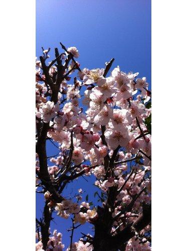 春_e0145685_872815.jpg