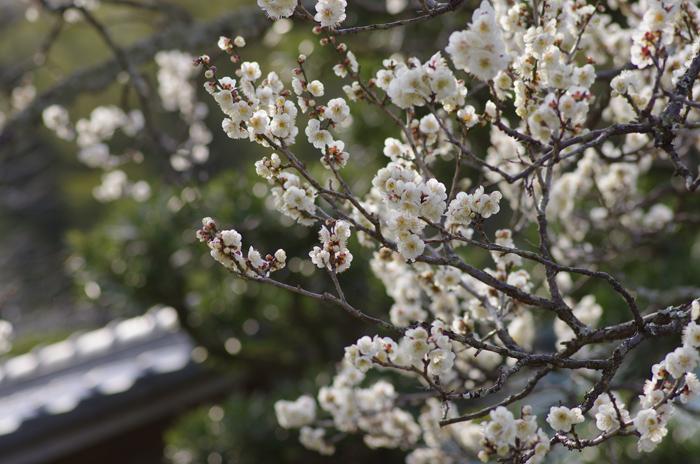 東慶寺の3月 2_b0151409_22462220.jpg