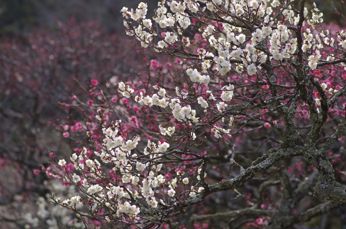 東慶寺の3月 2_b0151409_22464643.jpg
