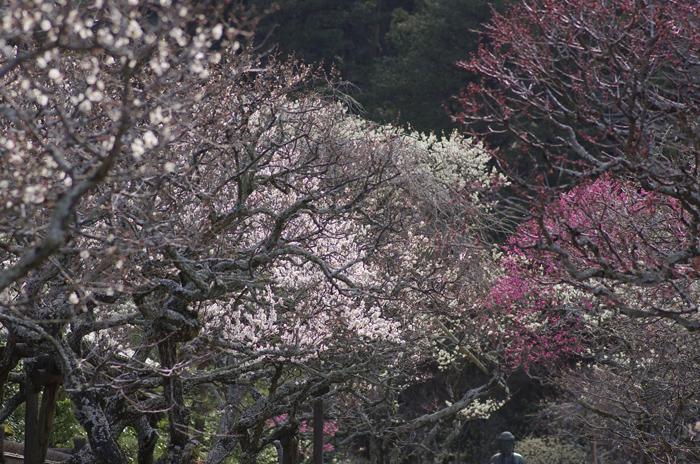 東慶寺の3月 2_b0151409_22492146.jpg