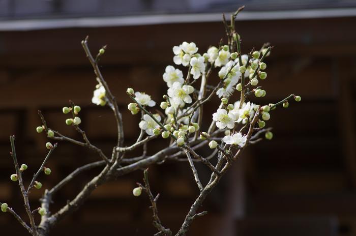 東慶寺の3月 2_b0151409_22502176.jpg