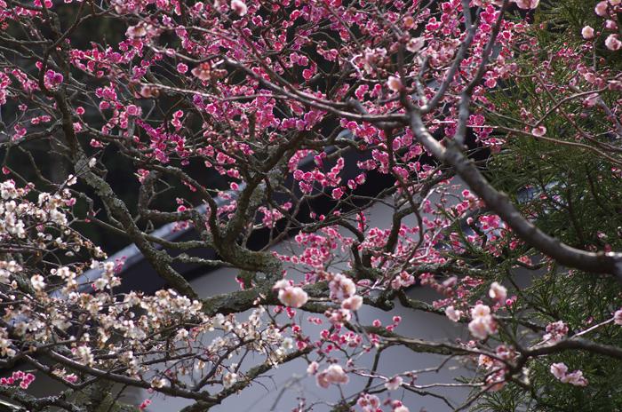 東慶寺の3月 2_b0151409_22523683.jpg