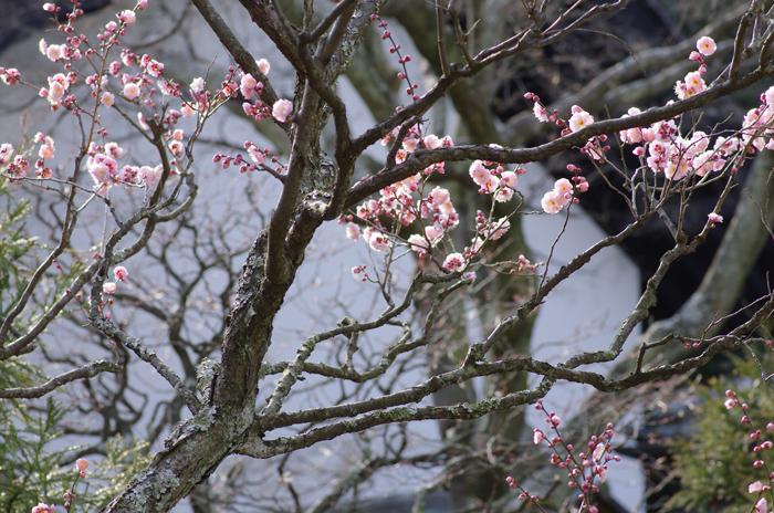 東慶寺の3月 2_b0151409_2252543.jpg