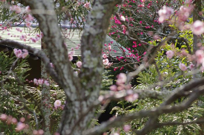 東慶寺の3月 2_b0151409_22544145.jpg