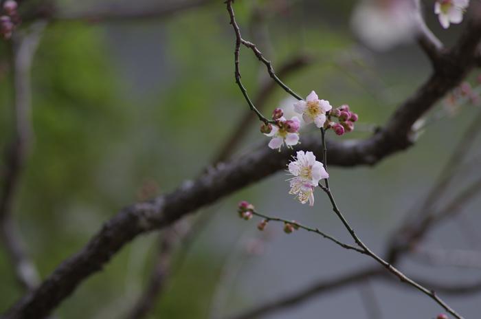 東慶寺の3月 2_b0151409_23132264.jpg