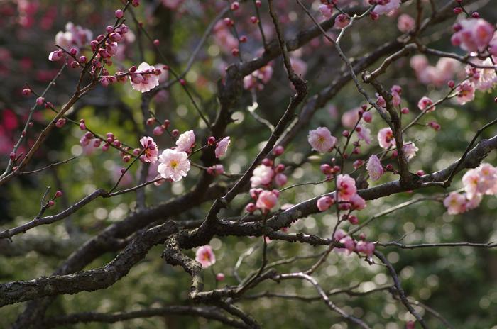 東慶寺の3月 2_b0151409_2354240.jpg