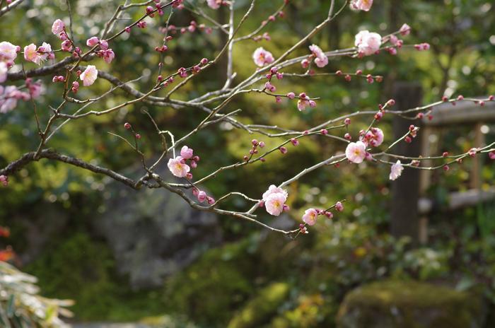東慶寺の3月 2_b0151409_2362025.jpg