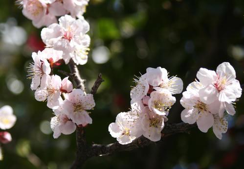 春の息吹_d0150720_12163951.jpg