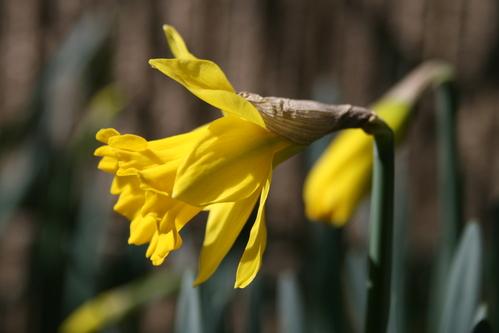 春の息吹_d0150720_12174661.jpg