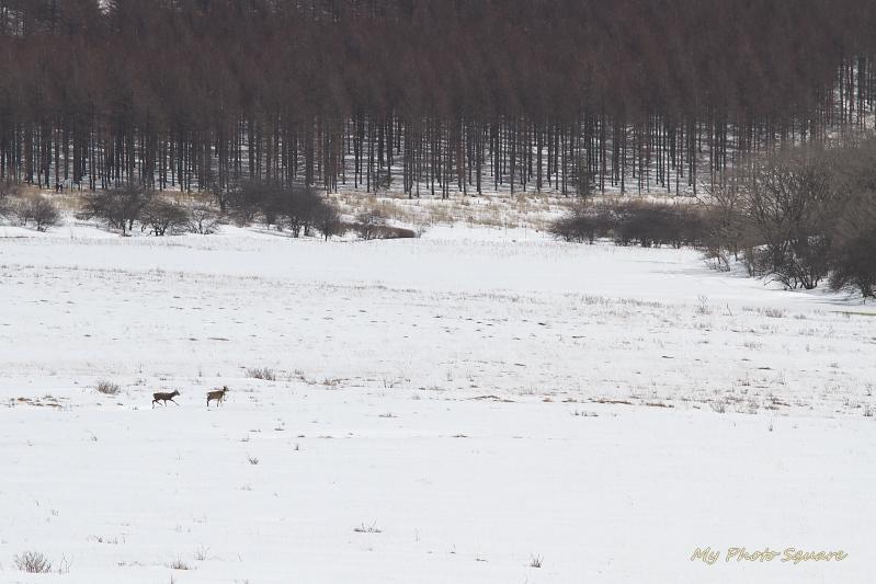 あっ、鹿だ~!_c0167028_21121496.jpg