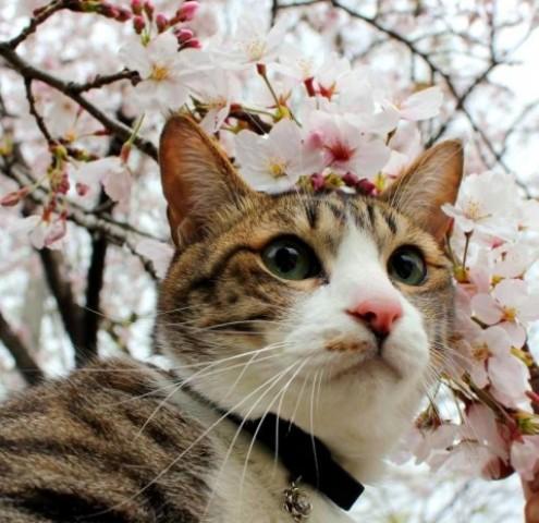 Yahooペット「春を感じる!」コンテストエントリー猫 ぽー編。_a0143140_23441781.jpg