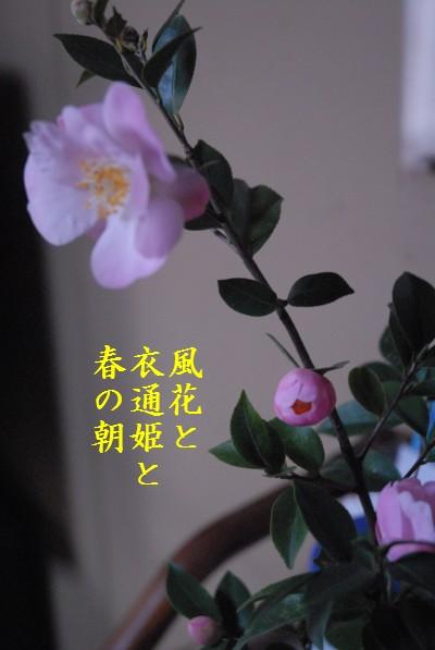 d0098541_16495966.jpg
