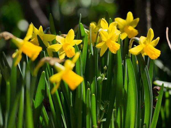 庭の花_b0229648_23451145.jpg
