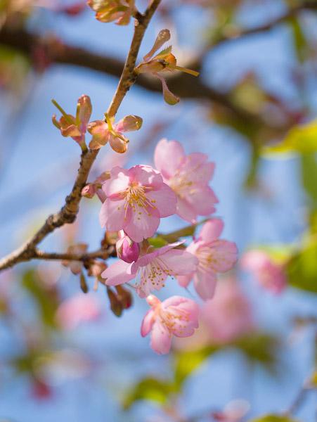 庭の花_b0229648_23451997.jpg