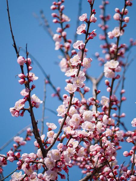 庭の花_b0229648_2345481.jpg