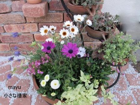 春の寄せ植え♪_a0243064_18423658.jpg