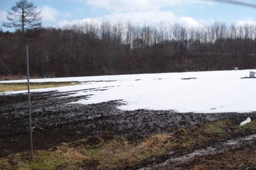 2012年3月26日の畑(残る雪と、寂しい小麦)_c0110869_1363449.jpg