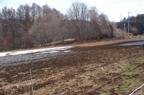 2012年3月26日の畑(残る雪と、寂しい小麦)_c0110869_1364694.jpg