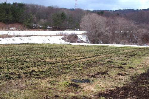 2012年3月26日の畑(残る雪と、寂しい小麦)_c0110869_1381497.jpg