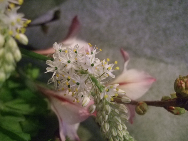 オークリーフ花の教室(落合さんの作品)_f0049672_1852185.jpg