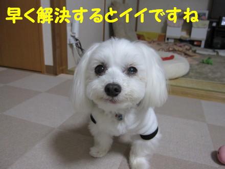 b0193480_163498.jpg