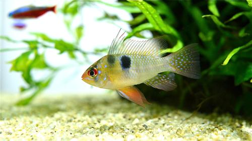 魚の写真_e0240394_1253123.jpg