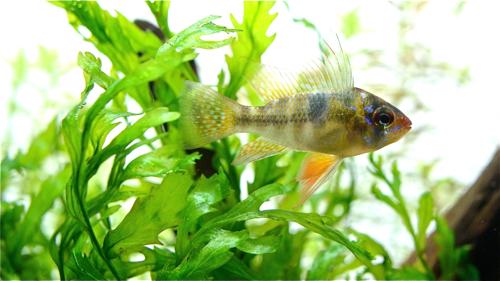 魚の写真_e0240394_125337.jpg
