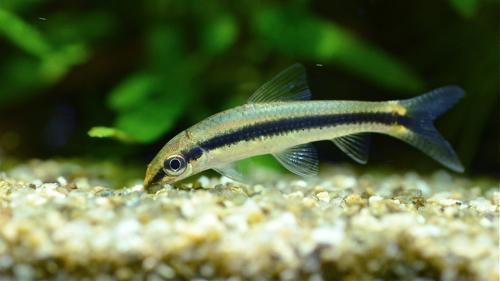魚の写真_e0240394_1532371.jpg