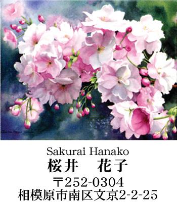 私たちって桜好き!(?)_d0225198_9392658.jpg