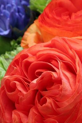 flower_c0239901_1913730.jpg