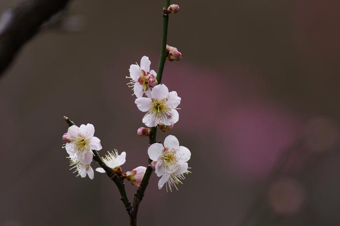 東慶寺の3月 3_b0151409_22124195.jpg