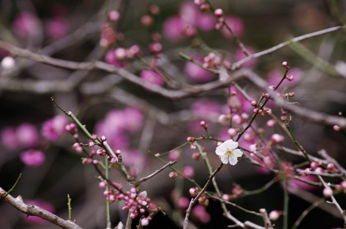 東慶寺の3月 3_b0151409_222802.jpg