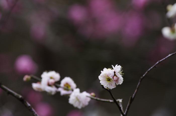 東慶寺の3月 3_b0151409_22283197.jpg