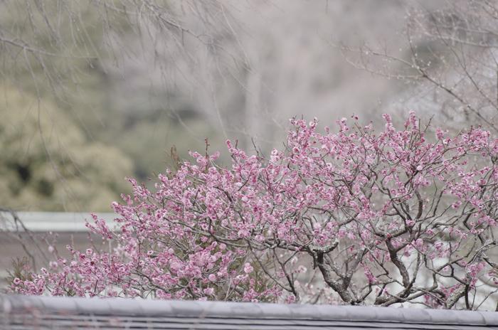 東慶寺の3月 3_b0151409_22321290.jpg