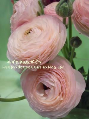 d0170109_2139551.jpg