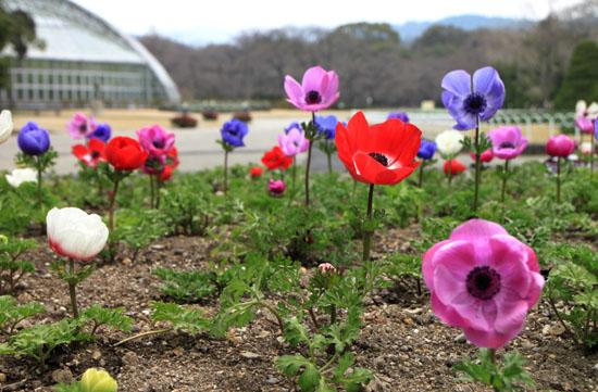 植物園1 花めぐり_e0048413_20302550.jpg