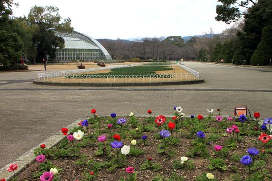 植物園1 花めぐり_e0048413_2030572.jpg