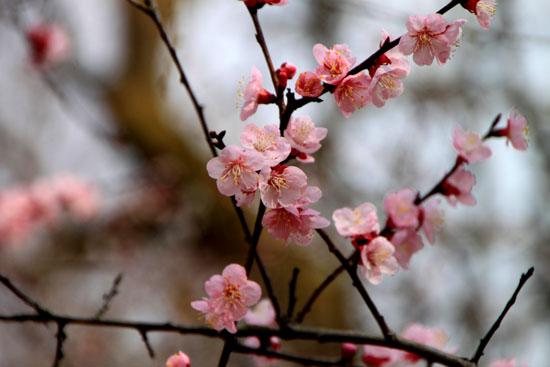 植物園1 花めぐり_e0048413_2036378.jpg
