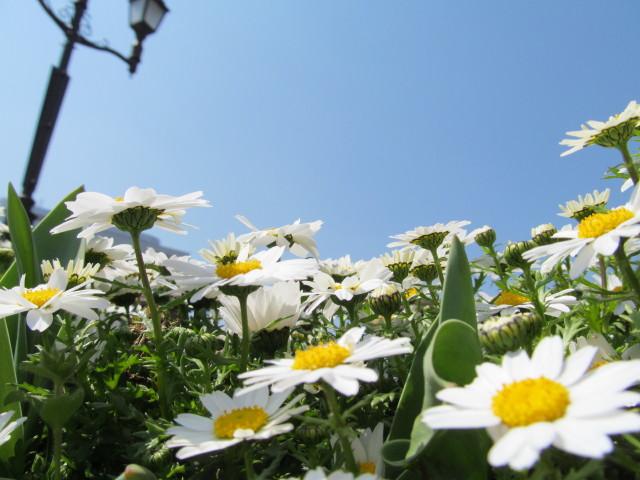 春がきたっ!!_d0140234_2035548.jpg