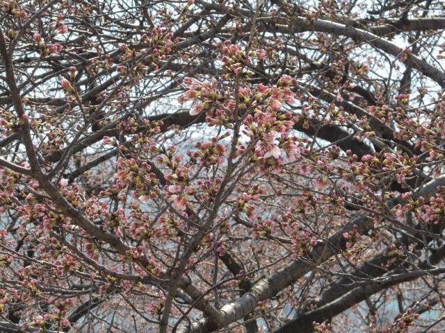 春がきたっ!!_d0140234_20384495.jpg
