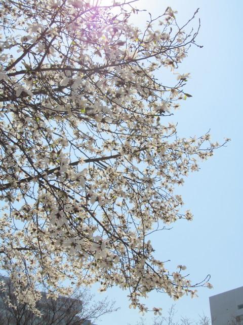 春がきたっ!!_d0140234_20415395.jpg