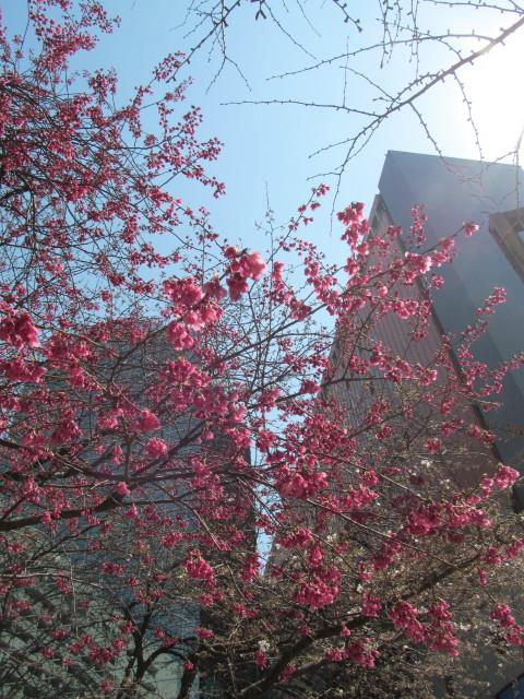 春がきたっ!!_d0140234_20454571.jpg